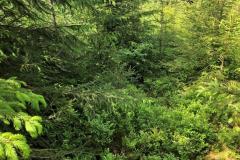 Murgschifferschaftswald